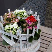 Kalanchoes in wit tafeldesign - Pim van den Akker - Flower Factor