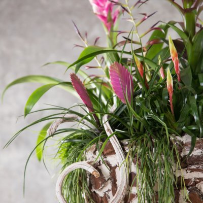 Lush plant arrangement with Bromeliads
