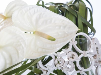 Cut Anthurium Christmas design