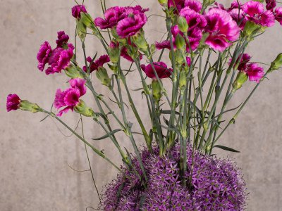 Trendy Dianthus designs