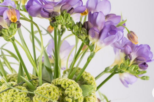 FreestyleFreesia Flower Factor