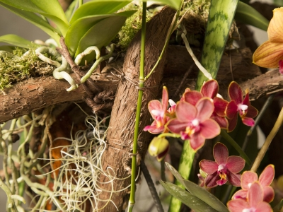 close up Secret Orchid Garden design van Klaus Wagener