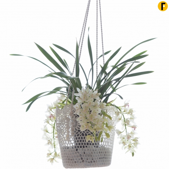 Cymbidium in hanging container
