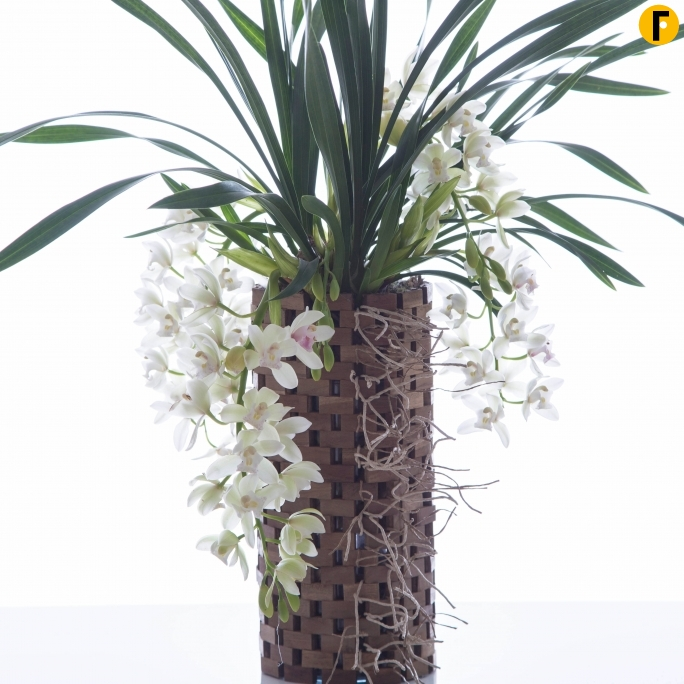 Cymbidium in houten pot