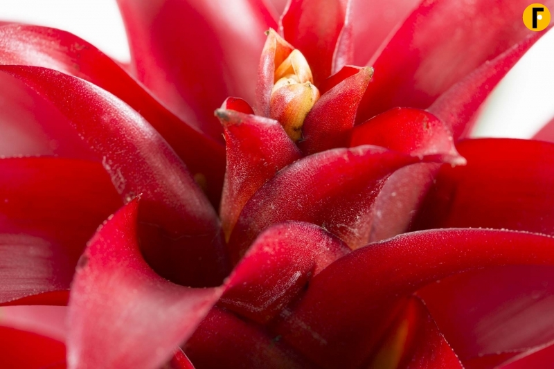 all about the guzmania | flower factor