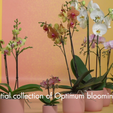 Opti-flor's Select Collection