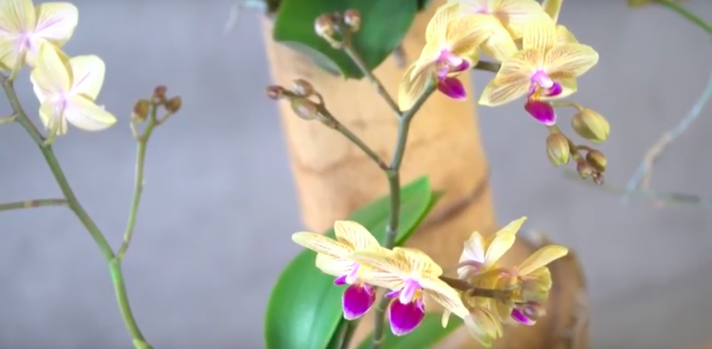 Orchideeën in bamboe - urban jungle stijl